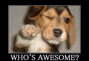 whoseawesome
