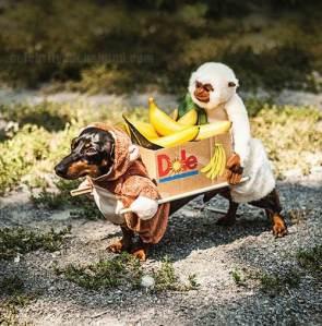 Banana's Anyone?