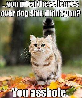 tumblr_lu93lpgeus1r0vvh7o1_400 raking where's my xanax?,Raking Leaves Meme